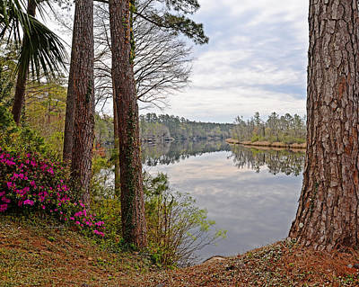 Photograph - Spring On The River by Linda Brown