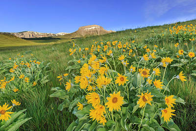 Photograph - Spring On The Rocky Mountain Front by Jack Bell