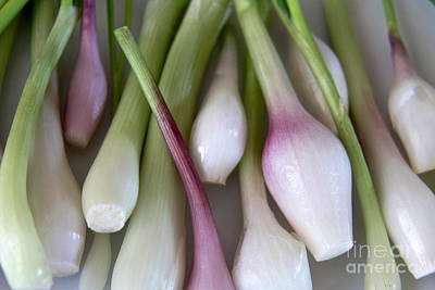Photograph - Spring Onions by Suzanne Oesterling