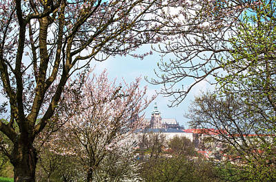 Photograph - Spring Orchards And St Vitus Cathedral 1. Prague  by Jenny Rainbow