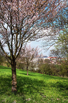 Photograph - Spring Orchards And St Vitus Cathedral. Prague  by Jenny Rainbow