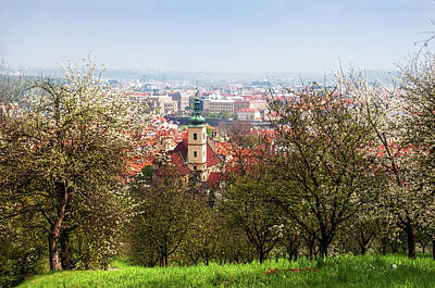 Photograph - Spring Orchards. Petrin Hill. Prague by Jenny Rainbow