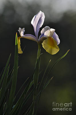 Garden Photograph - Spring Orchid by Angelo DeVal