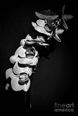 Photograph - Spring Orchids Bw 2 by Chalet Roome-Rigdon