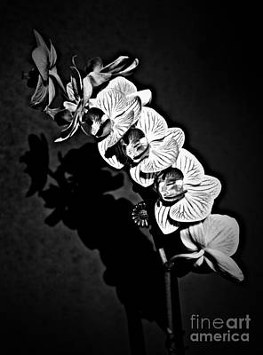 Photograph - Spring Orchids Bw by Chalet Roome-Rigdon