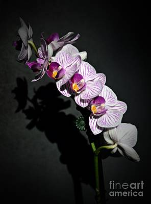 Photograph - Spring Orchids by Chalet Roome-Rigdon