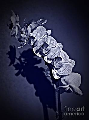 Photograph - Spring Orchids Cyan by Chalet Roome-Rigdon