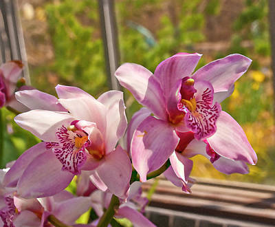 Restaurant Inspired Art Photograph - Spring Orchids Photograph by Don  Wright