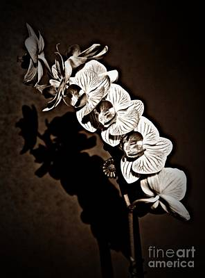Photograph - Spring Orchids Sepia  by Chalet Roome-Rigdon