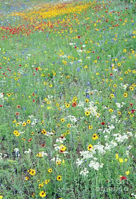 Wildflowers In Texas Photograph - Spring Palette by Joe Jake Pratt