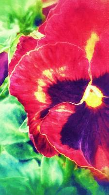 Photograph - Spring Pansy by Yoursbyshores Isabella Shores