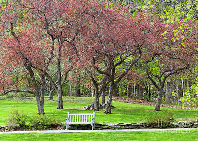Photograph - Spring Park Scenic by Alan L Graham
