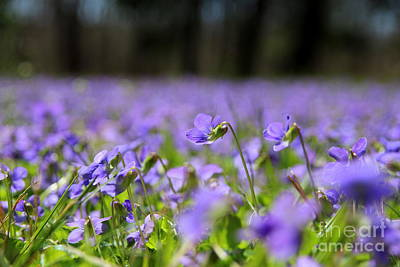 Field Photograph - Spring Passion by Neal Eslinger