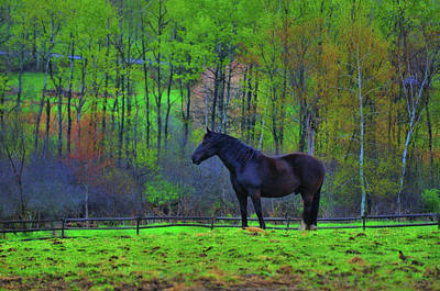 Spring Pasture Art Print by JAMART Photography