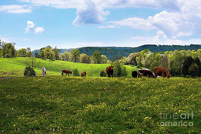 Photograph - Spring Pastureland by Paul Mashburn