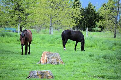 Photograph - Spring Pastures by Bonfire Photography