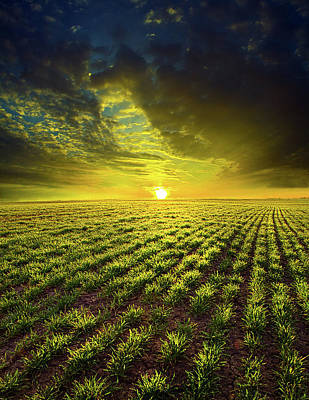Natur Photograph - Spring by Phil Koch