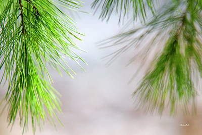 Photograph - Spring Pine Abstract by Christina Rollo