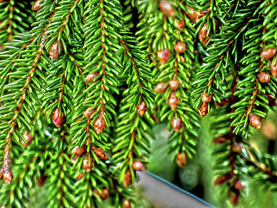 Photograph - Spring Pine by Leslie Montgomery