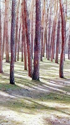 Photograph - Spring Pines by Oleg Zavarzin