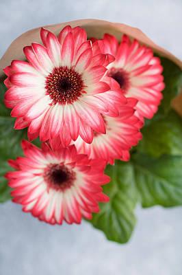 Spring Pink Flowers Gerbera Art Print