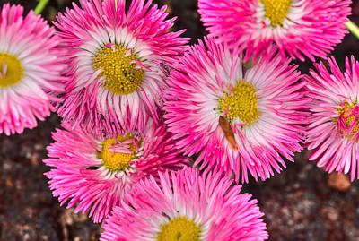 Photograph - Spring Pink by Nadia Sanowar