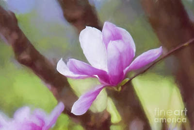 Photograph - Spring Pink Saucer Magnolia by Patricia Montgomery