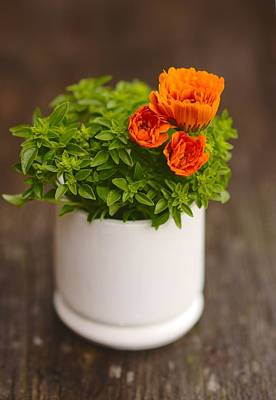 Photograph - Spring Plant Background With Marigold Flowers And Green Basil by Yana Shonbina