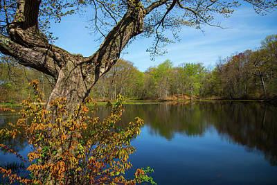 Stratford Photograph - Spring Pond by Karol Livote
