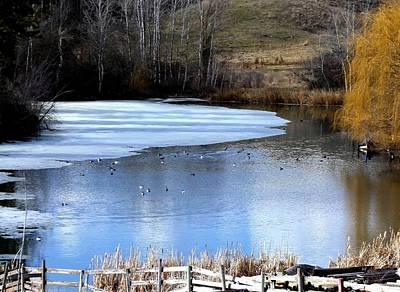 Photograph - Spring Pond by Will Borden