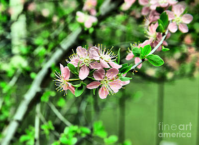 Graduation Sayings - Spring popping open by Jeff Swan