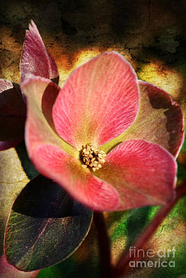 Photograph - Spring Preview by Kelly Nowak