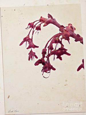 Photograph - Spring Rain by Linda Lees