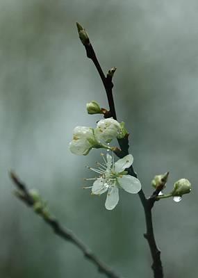 Photograph - Spring Rain Mood by I'ina Van Lawick
