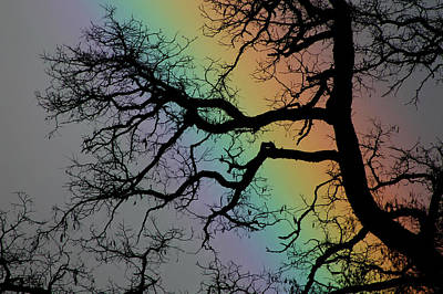 Photograph - Spring Rainbow by Cathie Douglas