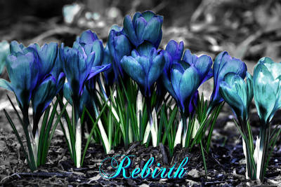 Print featuring the photograph Spring Rebirth - Text by Shelley Neff