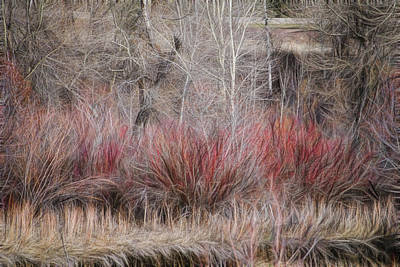 Photograph - Spring Red Bushes by Yulia Kazansky