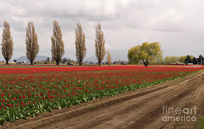 Photograph - Spring Red Tulip Field Landscape Art Prints by Valerie Garner