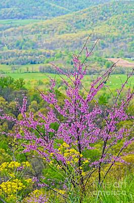 Shenandoah National Park Photograph - Spring Redbud by Kerri Farley