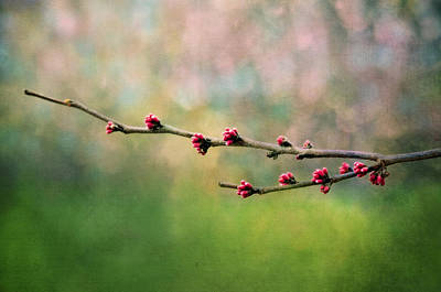 Thomas Kinkade Rights Managed Images - Spring Redbud Royalty-Free Image by Moon Stumpp