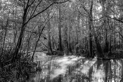 Photograph - Spring Reflections by Stefan Mazzola