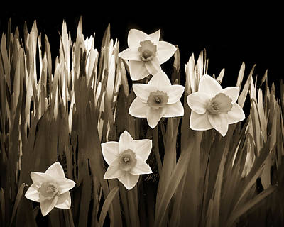 Brown Tones Photograph - Spring - Sepia by Nikolyn McDonald