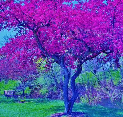 Photograph - Spring by Sharon Ackley
