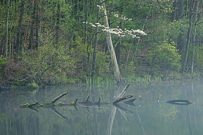 Dogwood Lake Photograph - Spring Shoreline With Dogwood by Dean Pennala