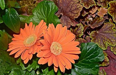 Photograph - Spring Show 16 Coral Bells And Orange Gerbera Daisies by Janis Nussbaum Senungetuk