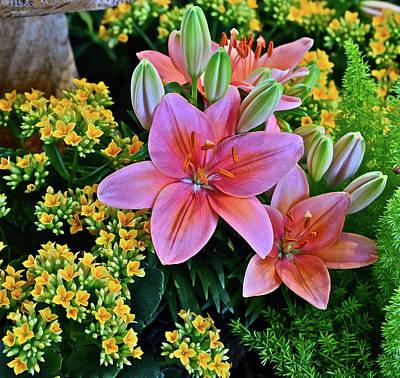 Photograph - Spring Show 17 Lilies In The Herb Garden by Janis Nussbaum Senungetuk