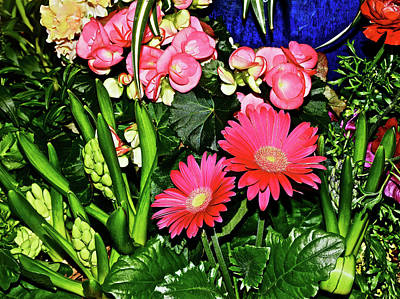 Photograph - Spring Show 17 Red Gerberas And Begonia by Janis Nussbaum Senungetuk