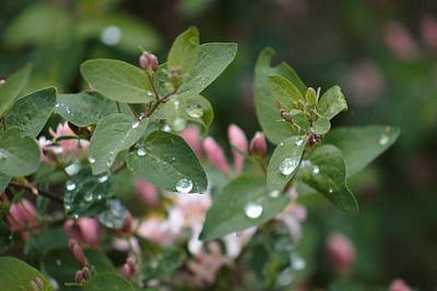 Photograph - Spring Showers 5 by Antonio Romero