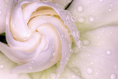 Photograph - Spring Showers On The Gardenia by JC Findley