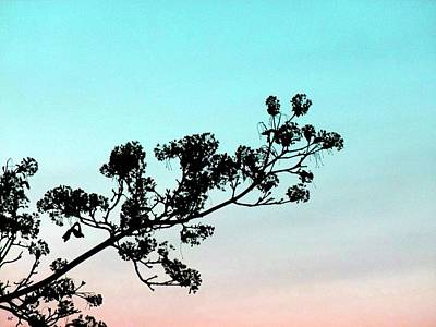 Photograph - Spring Silhouette by Will Borden